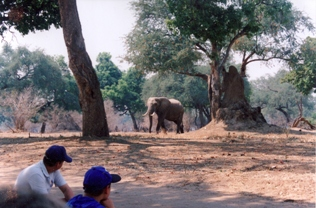 Mana Pools walks