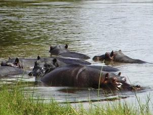 Hippo pools Moremi