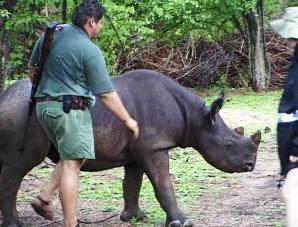 Matusadona - Black Rhino Intensive Protection Zone